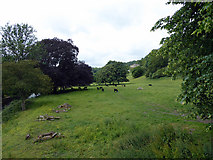 SK2957 : Pasture by the River Derwent by John Lucas