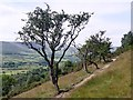 SK1386 : Tree-lined path above Edale by Graham Hogg