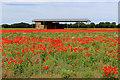 SE4767 : Field of Poppies beside Hag Lane by Chris Heaton