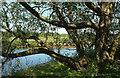 SE3174 : River Ure southwest of Nunwick by Derek Harper