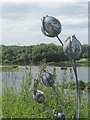 SP9313 : Large Flower Sculpture on display during the Bucks Open Studio at College Lake by Chris Reynolds