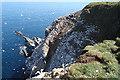 NJ8267 : Troup Head Gannetry by Anne Burgess