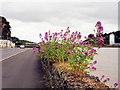 S5912 : Gratton Quay/Waterford Greenway by David Dixon