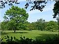 SO5721 : Parkland at Hill Court by Jonathan Billinger