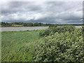 S5612 : River Suir by David Dixon