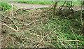 ST1574 : Branches across footpath, West Hill Wood by Derek Harper