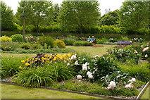 SE6656 : The Peony & Daylily Garden, Breezy Knees Gardens by Rich Tea
