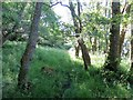 NM7043 : Rough track in the woods at Ardtornish Bay by John Ferguson