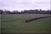 TQ9642 : Hedge end by N Chadwick