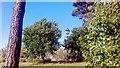 SJ8598 : Bird house in Cotton Fields Park, New Islington, Manchester by Benjamin Shaw