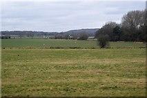 TR0345 : Rough grassland by N Chadwick