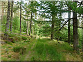 NH7378 : Track in Morangie Forest : Week 27