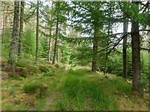 NH7378 : Track in Morangie Forest by Julian Paren