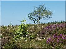 NH7278 : Open area in Morangie Forest by Julian Paren