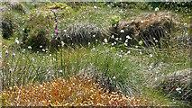NH6878 : Hilltop vegetation, Morangie Forest by Julian Paren