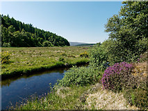 NH6877 : Balnagown River in Strath Rory by Julian Paren