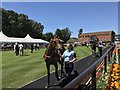 TL6161 : Horses in the parade ring at The July Course, Newmarket by Richard Humphrey