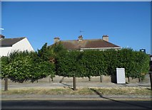 TR2968 : Overgrown house on Canterbury Road, Birchington by David Howard