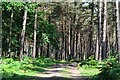 SU2503 : Track between trees, Ferny Knap Inclosure by David Martin