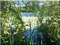 SJ6871 : Billinge Green Flash by Richard Webb