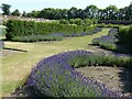 SE4017 : Lavender beds, Nostell Priory by Alan Murray-Rust