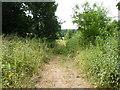 SO8564 : Track of Haye Lane, Hadley by Jeff Gogarty