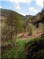 SN7377 : Cwm Rheidol in spring by John Lucas
