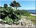 NS1063 : Ascog - Isle of Bute by Raibeart MacAoidh