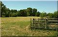 SU0331 : Field by the Nadder by Derek Harper