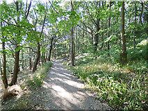 SE2436 : Path through Hawksworth Wood by Stephen Craven