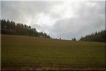 SX1061 : Sheep grazing by N Chadwick