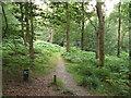 TQ4033 : Bridleway through Ashdown Forest by Malc McDonald