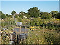 TF1606 : Allotments off Rectory Lane, Peakirk by Paul Bryan