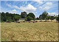 TL4557 : Cattle on New Bit by John Sutton
