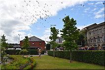 C4316 : Flock of birds, Derry / Londonderry by Kenneth  Allen