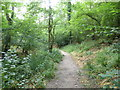 ST4855 : Path in Long Wood Nature Reserve by PAUL FARMER
