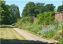 SK4924 : The Broad Walk, Whatton House Gardens by Alan Murray-Rust
