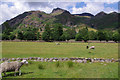 NY2906 : Sheep grazing, Great Langdale by Ian Taylor