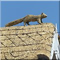 SK4723 : Squirrel on the roof – 2 by Alan Murray-Rust