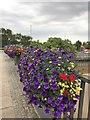 TF4609 : Flowers on Freedom Bridge - Wisbech in Bloom 2018 by Richard Humphrey