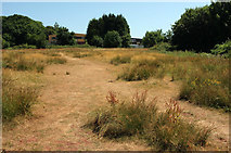 SX9066 : Parched grassland, Nightingale Park by Derek Harper