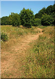 SX9066 : Path, Nightingale Park by Derek Harper