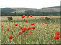 NT4562 : Poppies and wheat at Humbie by M J Richardson
