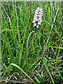 S6738 : Wild Orchid by kevin higgins