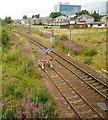 NS5362 : Railway line at Corkerhill by Richard Sutcliffe