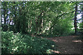 ST5175 : Woodland at the back of the landscaped bank, M5 Gordano Services near Bristol by Robin Stott