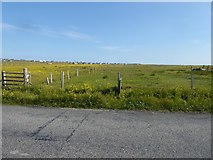 NB5263 : Looking from the A857 across fields towards scattered houses in Habost by David Gearing