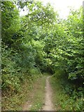 SX6746 : Footpath in Doctor's Wood, Bigbury by David Smith