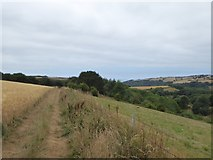 SX6845 : Avon Estuary Walk along edge of a field at Stadbury by David Smith
