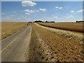 TL2580 : Start of the harvest by Hugh Venables